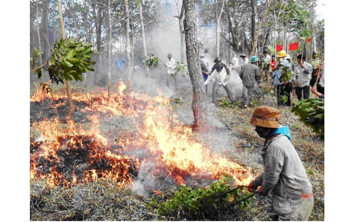 Phòng chống cháy rừng mùa nắng nóng